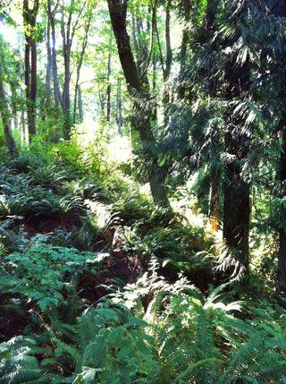 Carkeek forest 2