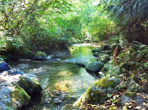 Carkeek stream